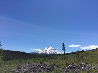 NF 16 Vista Ridge