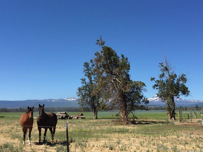 horse_land_02