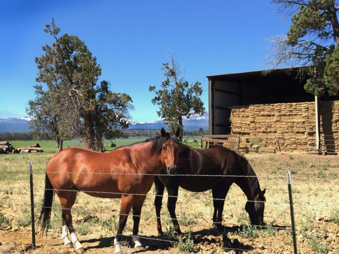horse_land_03
